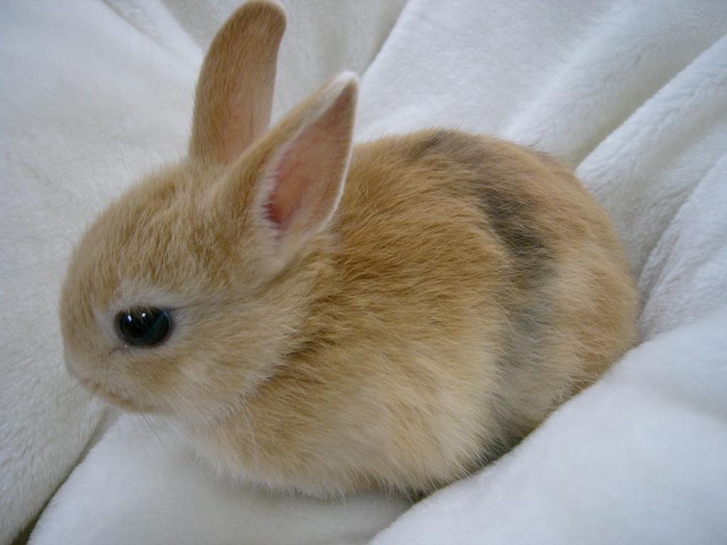 ウサギの画像 p1_36