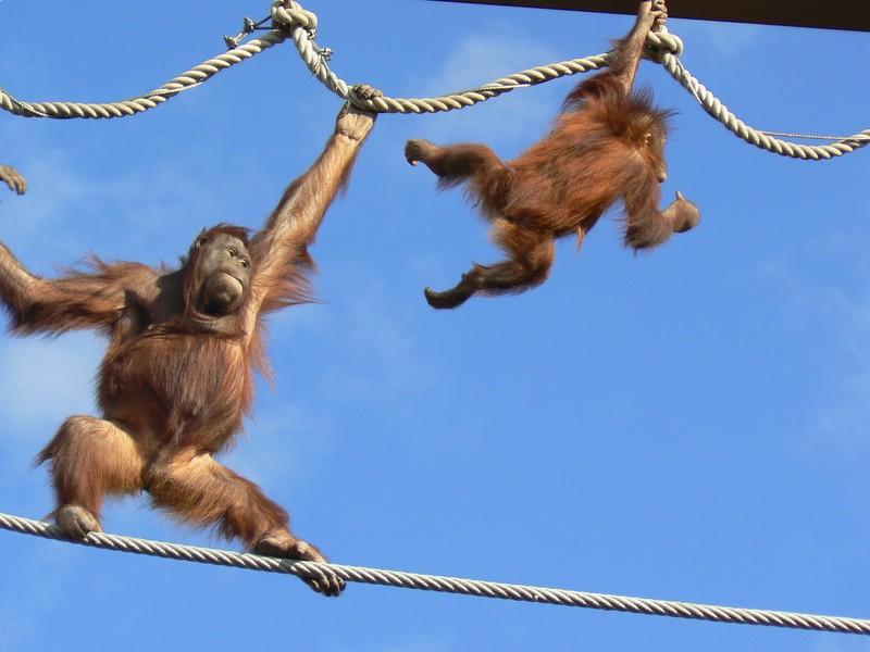 カメラ目線写真:動物チラリズム