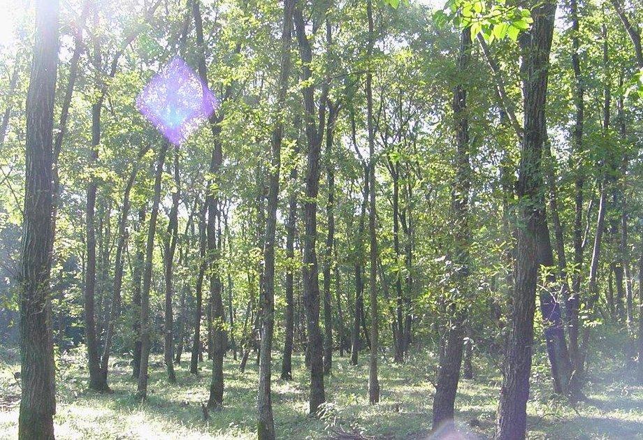 ところで、林には、大きく分けると、天然林と人工林があります。 天然林は...  森林インストラク