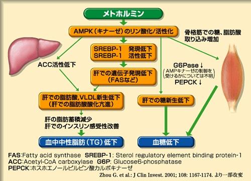 井蛙内科開業医/診療録(2)