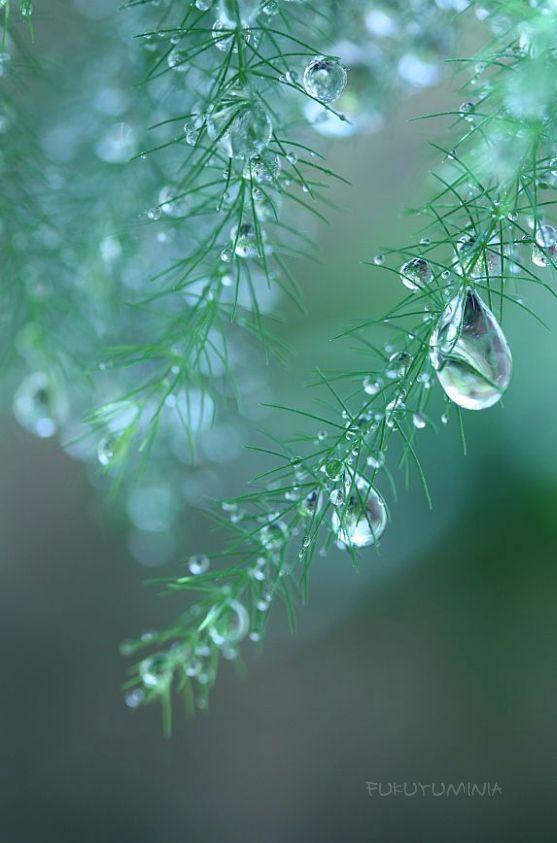 雫 08 Photo Garden 水の贈り物 雫の画像コレクション Naver まとめ