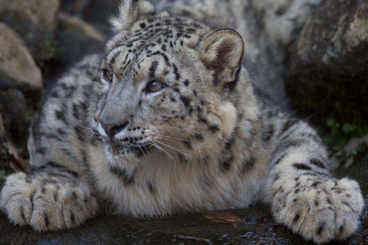 あれ,初登場?つか,最初で最後かも(wTags:#多摩動物公園 # 多摩動物公園
