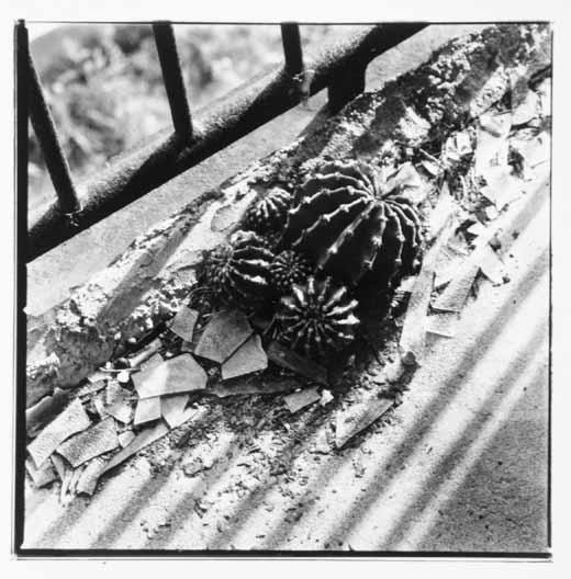 高島炭鉱の画像 p1_37