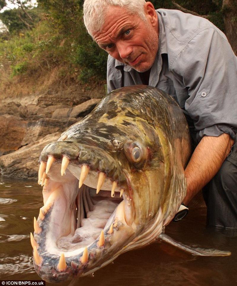 рыбалка что такое торпеда