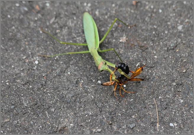 暫く格闘していましたが、運良くハチは逃れられました。 気ままなフォトライフ