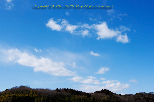 と、春めいた丸い綿雲を見たのはつい先日のこと。それ程寒くない穏やかな天気... 春隣りの綿雲